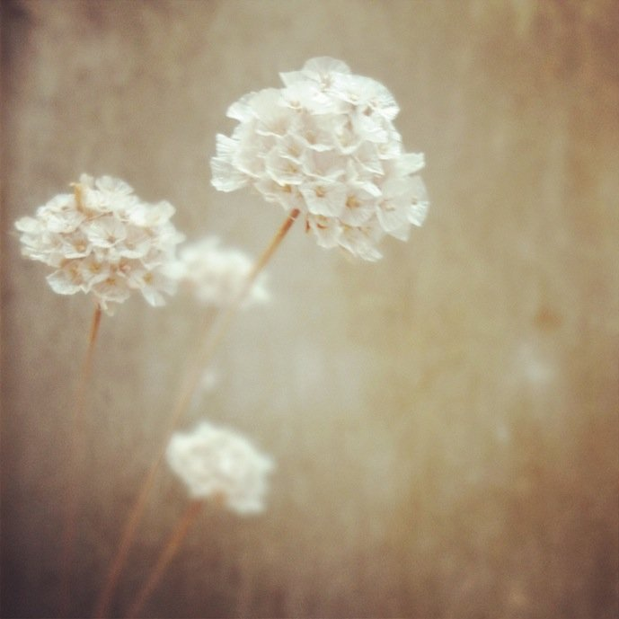 Light flowers by Tanja Ting