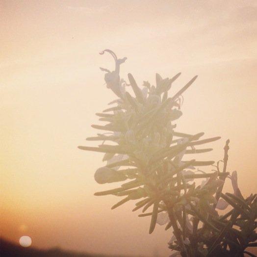 Sunset By Tanja Ting