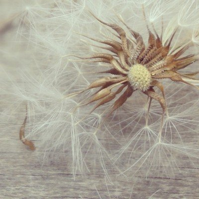 Fragile by Tanja Ting