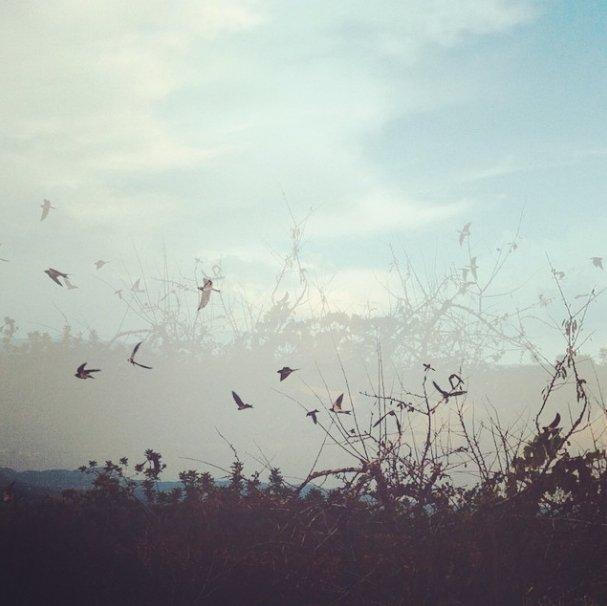 Birds by Tanja Ting